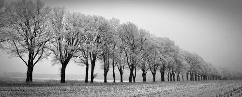 winter trees avenue
