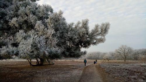 winter landscape ripe
