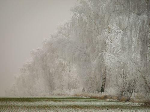 winter snow wintry