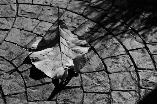 winter leaf shadows