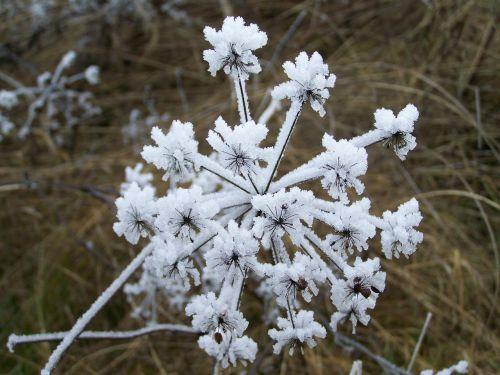 winter hoary rimy