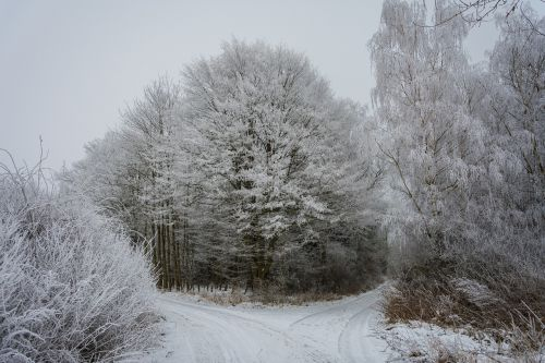 winter forest wintry