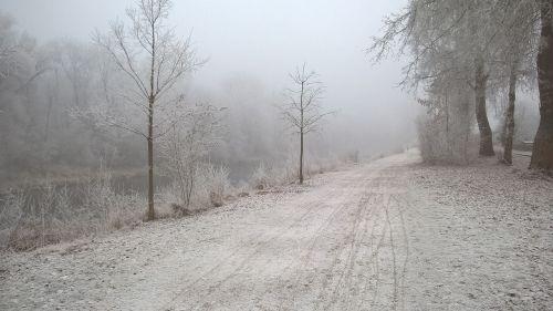 winter away trees