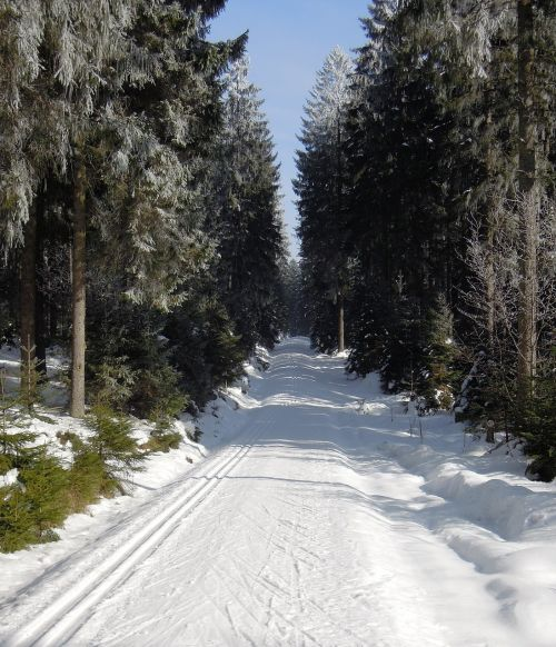 winter forest forest road