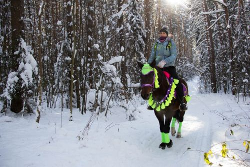 winter forest horse