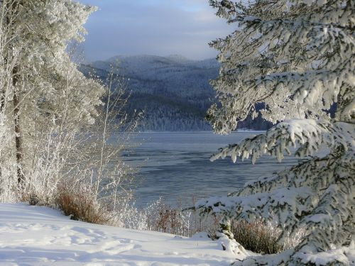 winter season frosty