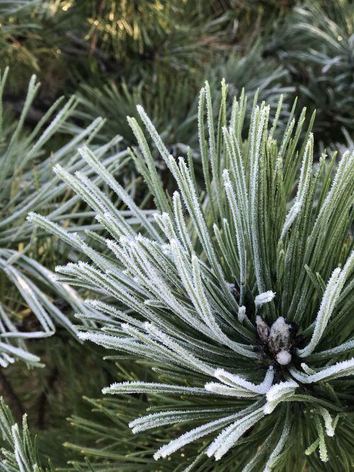 winter hoarfrost frost
