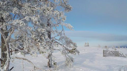 winter levi lapland