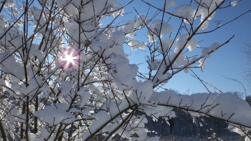 winter sun january
