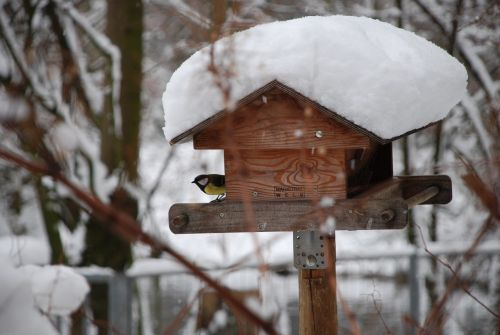 winter snow aviary