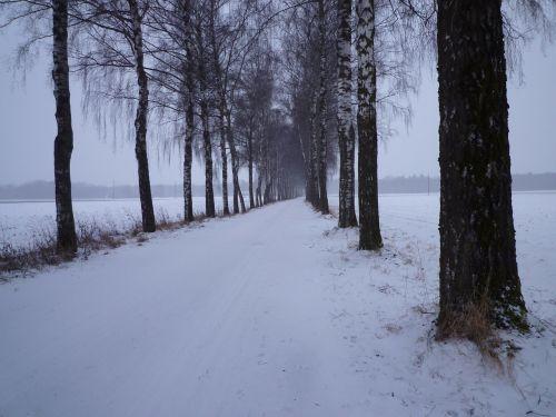 winter snow evening