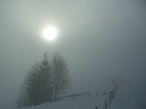 winter fog grove of trees