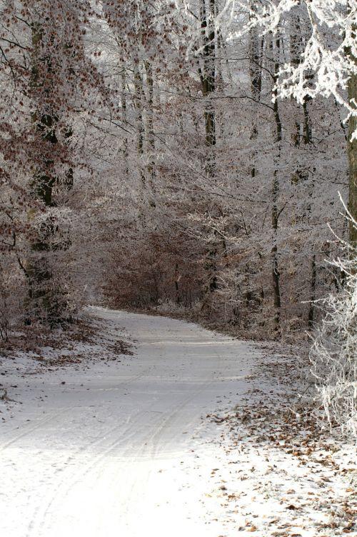 winter wintry a snowy path
