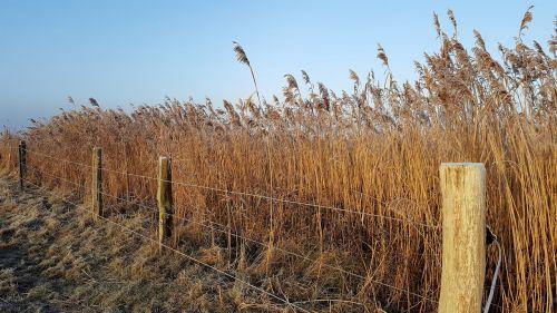 winter borkum fence