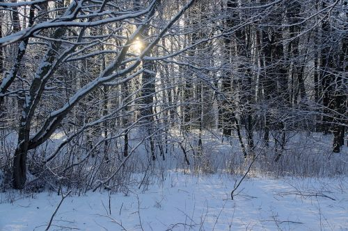 winter snow view