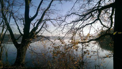 winter trees lake