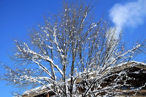 winter snow tree
