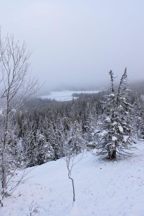 winter nipple nature