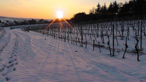 winter vineyard in winter vineyard