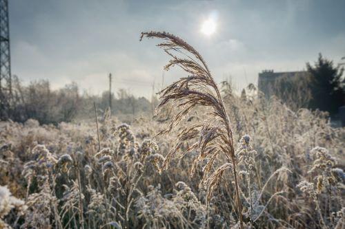 winter frost the ecclesia