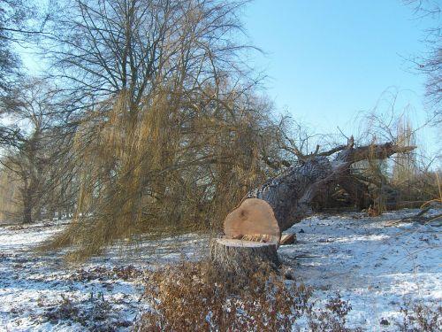 winter tree cases