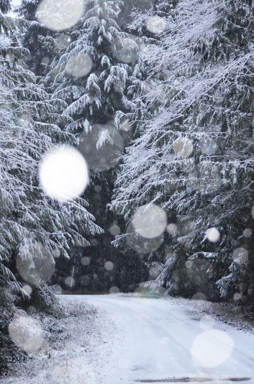 winter snowing snow
