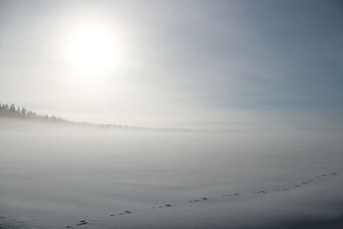 winter snow field