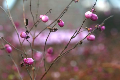 winter flowers pink