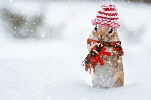 winter chipmunk knit hat