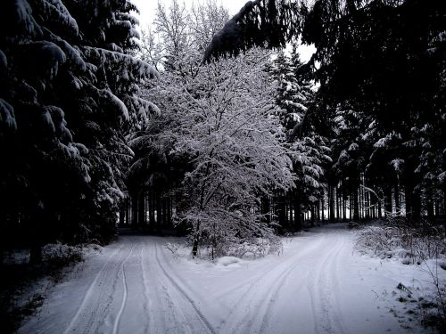 winter winter forest snow