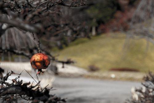winter japan tree