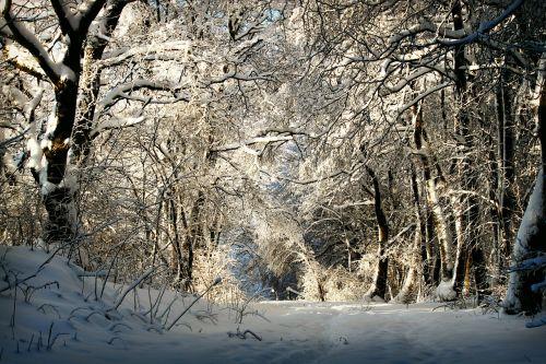winter wintry snow