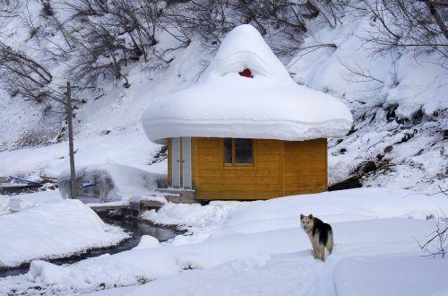 winter hot spring pairs