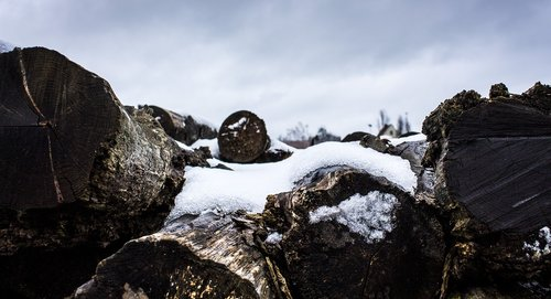 winter  snow  nature