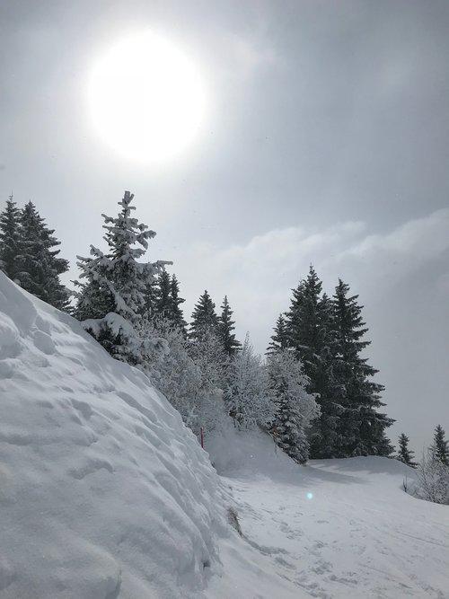winter  winter hiking trail  wintry