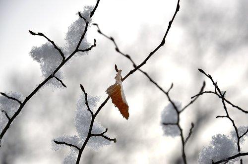 winter  leaf  nature