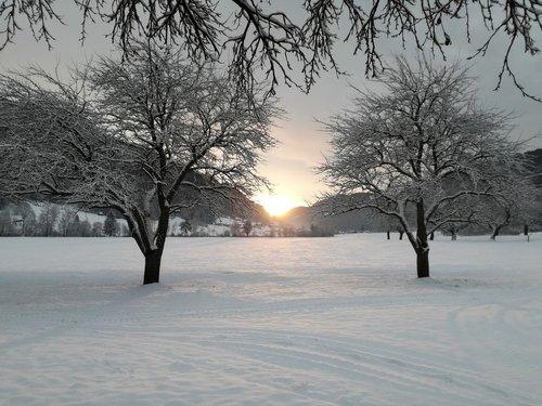 winter  landscape  white