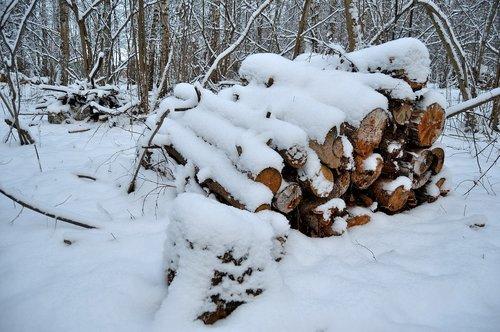 winter  forest  felling