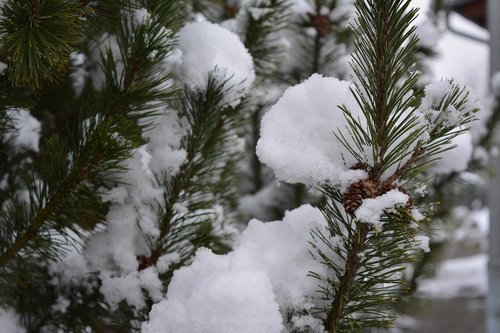 winter  snowfall  nature