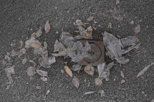 winter  gel  leaf