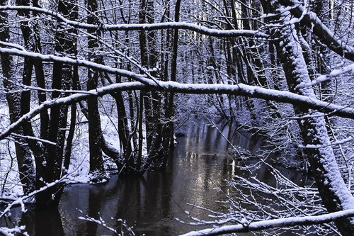winter  winter forest  reflection