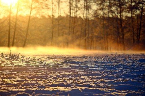winter  snow  fog