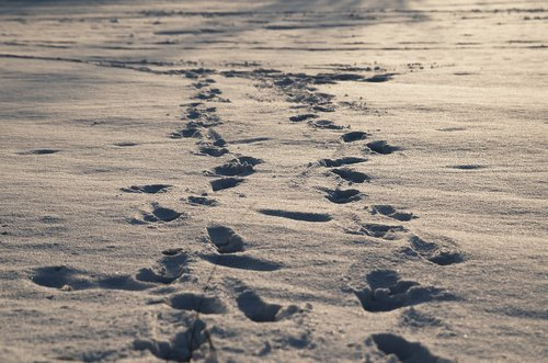 winter  traces  wandering