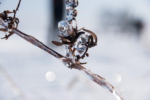 winter  ice  snow