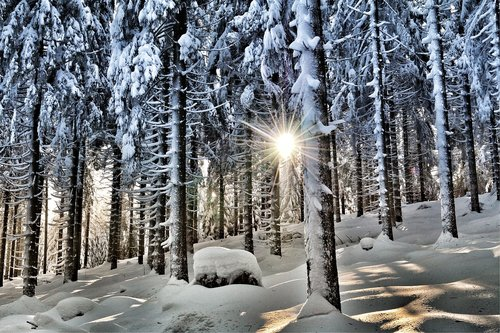 winter  winter forest  snow