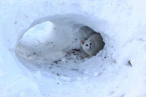 winter cat snow