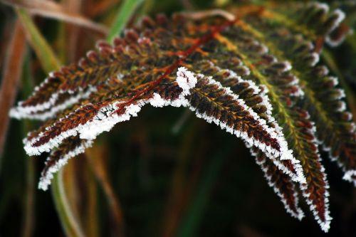 winter frozen icing