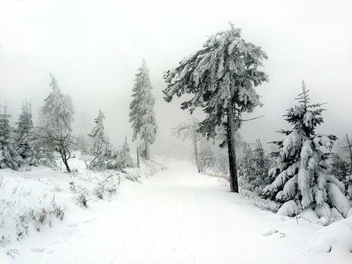winter snow tree