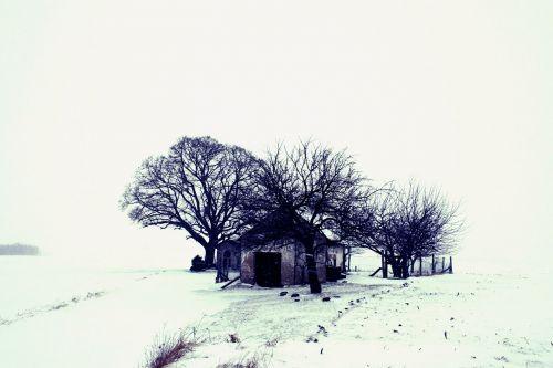 winter landscape snow