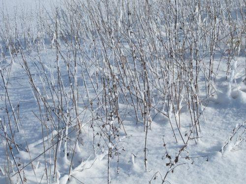 winter snow grass